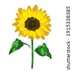 pencil drawing sunflowers... | Shutterstock . vector #1915338385