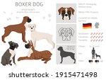 Boxer dog clipart. Different poses, coat colors set.  Vector illustration