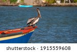 Pelican Boat  Sea Bird Fishing