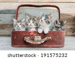 Kittens In Retro Suitcase On A...