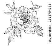 peony flower. floral botanical...   Shutterstock .eps vector #1915754398
