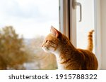 A Cute Ginger Tabby Cat Is On...