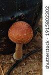 Fungi Thrive On The Ground