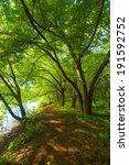trees in a forest during the... | Shutterstock . vector #191592752