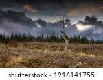 A Dead Tree Amongst The Felled...