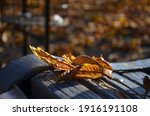 Yellow Chestnut Leaf On A Bench ...