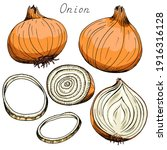 Onion. Whole  Sliced Vegetable. ...