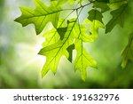spring oak leaves on branch... | Shutterstock . vector #191632976