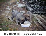 Little Cute Puppies. Two Gray...