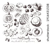 vintage drawings of nuts and... | Shutterstock .eps vector #1916431538