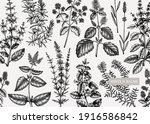 mints background. hand sketched ... | Shutterstock .eps vector #1916586842