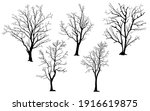 Silhouette Of Tree Without...