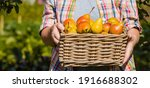 Banner. Wicker Basket With...