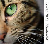 A Macro Shot Of A Young Tabby...