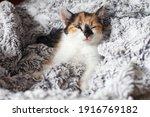Sleepy Cute Little Kitten...