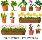 set of different plants in pots ... | Shutterstock .eps vector #1916989655