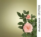 Pink roses on green background - stock photo