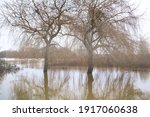 Flooded Filed  High Water ...