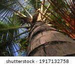 bottom to top view of palm tree  | Shutterstock . vector #1917132758