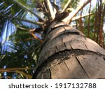 bottom to top view of palm tree  | Shutterstock . vector #1917132788