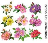 beautiful,beauty,blossom,botanic,color,concept,contour,creative,decoration,eglantine,flora,floral,floret,flower,garden