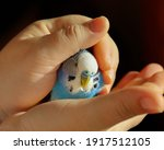 Portrait. A Budgie Sits In The...