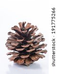 pine cones isolated with white... | Shutterstock . vector #191775266