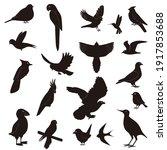 silhouettes birds flight... | Shutterstock . vector #1917853688