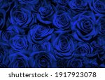Blue Roses  Isolated On A Black ...
