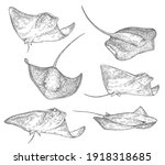 stingray fish sketch icons ... | Shutterstock .eps vector #1918318685