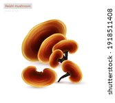 reishi mushroom  ganoderma... | Shutterstock .eps vector #1918511408