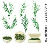 dark green hijiki seaweeds or... | Shutterstock .eps vector #1918577045
