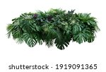 Small photo of Tropical leaves foliage plant jungle bush floral arrangement nature backdrop with Monstera and tropic plants palm leaves isolated on white background, clipping path included.