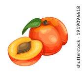 peach fruit vector illustration ... | Shutterstock .eps vector #1919096618
