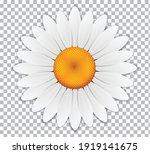 daisy chamomile flower isolated ...   Shutterstock .eps vector #1919141675