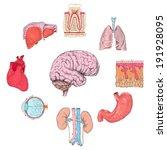 human organs set of lungs heart ... | Shutterstock . vector #191928095