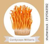 cordyceps militaris.... | Shutterstock .eps vector #1919363582