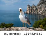 Portrait Of A Screaming Seagull