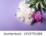Peonies On  Violet Background....