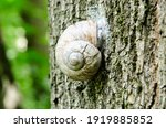 A Macro Shot Of A Snail On A...