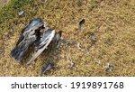 Carcass Of Bird That Die A Long ...