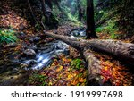 Autumn Forest River Creek...