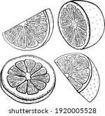 vector illustration. citrus... | Shutterstock .eps vector #1920005528