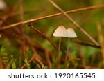 Two Small Mushrooms In The...
