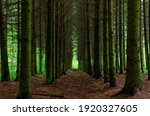 Alley Through The Green Forest. ...