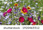 Colourful Wild Flowers Blooming ...