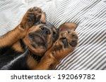 Cute Rottweiler Mix Puppy...