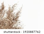 bundles of reed on white... | Shutterstock . vector #1920887762