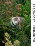 Small photo of Vitamin green grass for cats. Adult domestic cat eating grass on the garden. Kitty sitting in grass and gnawing a branch stick.