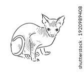 sketch of a sphinx cat ... | Shutterstock .eps vector #1920989408